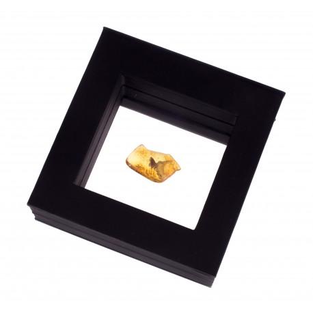 Gintaro gabalėlis su inkliuzu dėžutėje