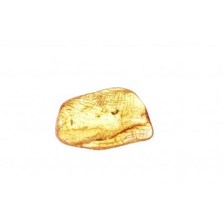 Skaidrus geltonas gintaras su inkliuzu