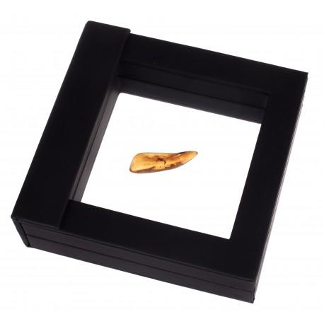 Gintaro gabalėlis su inkliuzu ekspozicinėje dėžutėje