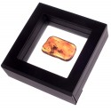 Amber nugget with an inclusion in the box