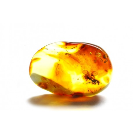 Amber inclusion